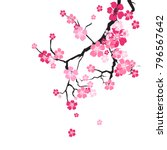 cherry blossom background... | Shutterstock .eps vector #796567642