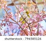 beautiful bird chestnut...   Shutterstock . vector #796585126