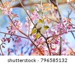 beautiful bird chestnut...   Shutterstock . vector #796585132