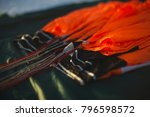 lower edge of the canopy of the ... | Shutterstock . vector #796598572