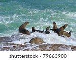 Sea Lions At La Jolla Cove ...