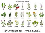best medicinal herbs for... | Shutterstock .eps vector #796656568