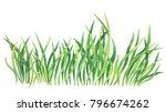 fresh spring green grass.... | Shutterstock . vector #796674262