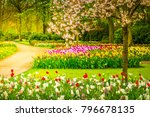 colourful blooming cherry tree... | Shutterstock . vector #796678135