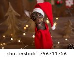 dog russian toy terrier.... | Shutterstock . vector #796711756