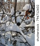 pine cones covered in snow alot ... | Shutterstock . vector #796712602