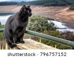 adult bombay cat with natural... | Shutterstock . vector #796757152