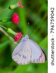 butterfly perched on a red... | Shutterstock . vector #796759042