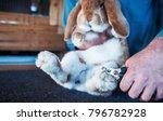 rabbit breeder trimming nails... | Shutterstock . vector #796782928