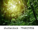lush green foliage in tropical... | Shutterstock . vector #796825906