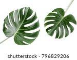 tropical leaves monstera on...   Shutterstock . vector #796829206