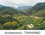 2000 tea plantation at chiang... | Shutterstock . vector #796969882