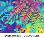 digital illustration   tropical ... | Shutterstock . vector #796997686