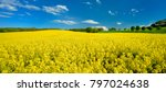 Field Of Rapeseed Blossoming...