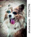 Cool Dog In Mirrored Sunglasse...