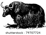 yak  bos grunniens | Shutterstock .eps vector #79707724
