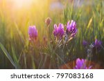purple wild flowers in the... | Shutterstock . vector #797083168