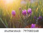 purple wild flowers in the... | Shutterstock . vector #797083168