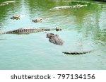 Crocodile  Alligator Like...