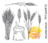 hand drawn sketch... | Shutterstock .eps vector #797164972