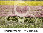 pipes with tulips in double...   Shutterstock . vector #797186182