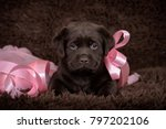 puppy labrador with pink ribbon ... | Shutterstock . vector #797202106