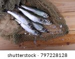 herrings on net. pacific... | Shutterstock . vector #797228128