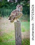 owls at an owl sanctuary  | Shutterstock . vector #797252626