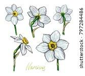 set of different flowers of... | Shutterstock . vector #797284486