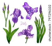 purple iris flowers on a white... | Shutterstock . vector #797296102