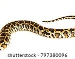 python regius   the muscular... | Shutterstock . vector #797380096