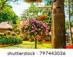 landscape of mae fah luang... | Shutterstock . vector #797443036