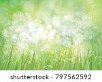 vector summer   green   nature  ... | Shutterstock .eps vector #797562592