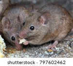 mouse eating in urban house... | Shutterstock . vector #797602462
