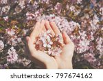 sakura flowers in his hands.... | Shutterstock . vector #797674162