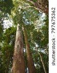 gold coast  qld   australia  ... | Shutterstock . vector #797675362