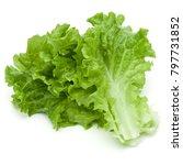 fresh green lettuce salad... | Shutterstock . vector #797731852