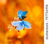 Two Little Blue Butterflies...