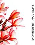 tropical flowers frangipani ... | Shutterstock . vector #797748346