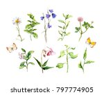 set of meadow flowers  herbs ... | Shutterstock . vector #797774905
