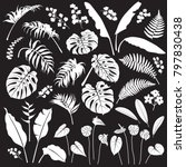 tropical plant set. white... | Shutterstock .eps vector #797830438