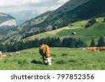 grindelwald  stunning village...   Shutterstock . vector #797852356