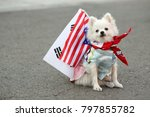 dog with us and south korean... | Shutterstock . vector #797855782
