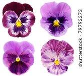 Set Of Purple Pansy On White...