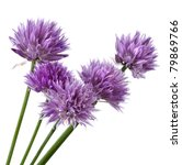 Flowers Of Chives  Isolated On...