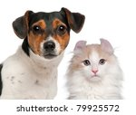 Stock photo jack russell terrier and a half years old and a american curl kitten months old in front of 79925572