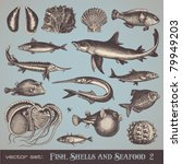 vector set  fish  shells and... | Shutterstock .eps vector #79949203