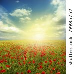 red poppies on green field  sky ... | Shutterstock . vector #79985752