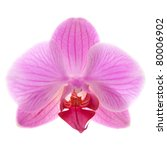Single Flower Of A Phalaenopsi...