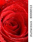 The Beautiful Red Rose As A...